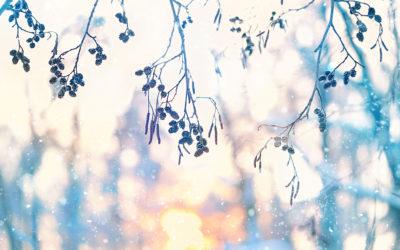 DEGEMED wünscht friedliche Weihnachten und einen gesunden Start ins neue Jahr